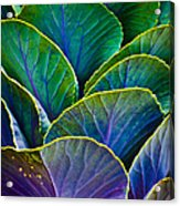 Colors Of The Cabbage Patch Acrylic Print by Christi Kraft
