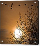 Coming Home In The Spring Acrylic Print by Bob Orsillo