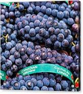 Concord Grapes Acrylic Print by Mary  Smyth