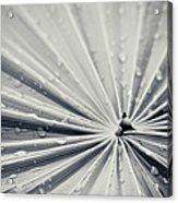 Convergence Acrylic Print by Adam Romanowicz