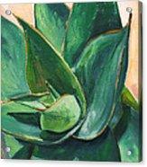 Coral Aloe 3 Acrylic Print by Athena Mantle