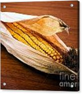 Corn Ear Acrylic Print by Sinisa Botas