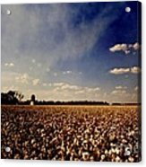 Cotton Field Acrylic Print by Scott Pellegrin