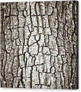 Cottonwood Bark 1 Acrylic Print by Marilyn Hunt