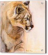 Cougar On The Prowl Acrylic Print by Bonnie Rinier