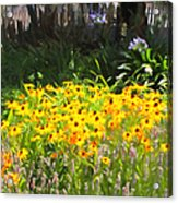 Countryside Cottage Garden 5d24560 Long Acrylic Print by Wingsdomain Art and Photography