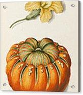 Courgette And A Pumpkin Acrylic Print by Joseph Jacob Plenck