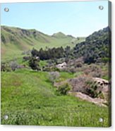 Cows Along The Rolling Hills Landscape Of The Black Diamond Mines In Antioch California 5d22294 Acrylic Print by Wingsdomain Art and Photography