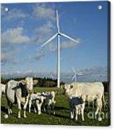 Cows And Windturbines Acrylic Print by Bernard Jaubert