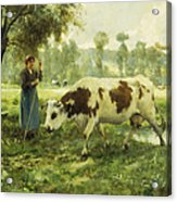 Cows At Pasture  Acrylic Print by Julien Dupre