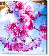 Crabapple Impressions Acrylic Print by Bob Orsillo