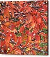 Crabapple Acrylic Print by Kimberly Maxwell Grantier