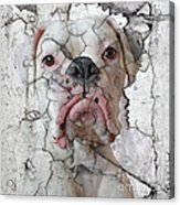 Cracking Up Acrylic Print by Judy Wood