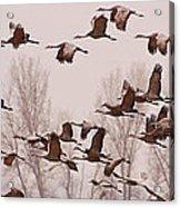 Cranes Across The Sky Acrylic Print by Don Schwartz