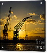 Cranes In The Sunset Acrylic Print by David Hill