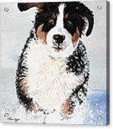 Crazy For Snow Acrylic Print by Liane Weyers