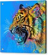 Crazy Tiger Acrylic Print by Olga Shvartsur