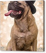 Crazy Top Dog Acrylic Print by Edward Fielding