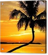 Crooked Palm Acrylic Print by Karen Wiles