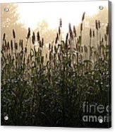 Crops In Fog Acrylic Print by Olivier Le Queinec
