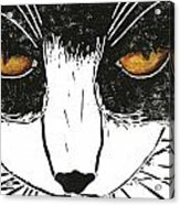 Cross Kitty Acrylic Print by Kerrie  Hubbard