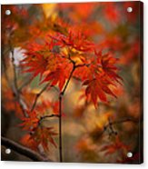 Crown Of Fire Acrylic Print by Mike Reid