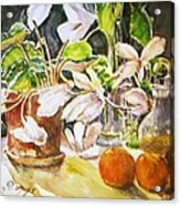 Cyclamen With Tangerines And Kiwi Acrylic Print by Vivian  Castillo M