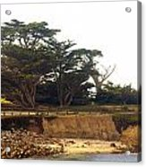 Cypress Trees On 17 Mile Drive Acrylic Print by Barbara Snyder