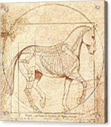 da Vinci Horse in Piaffe Acrylic Print by Catherine Twomey