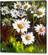Daisies Acrylic Print by Robert Carver