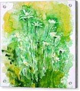Daisies Acrylic Print by Zaira Dzhaubaeva