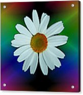 Daisy Bloom In Neon Rainbow Lights Acrylic Print by ImagesAsArt Photos And Graphics