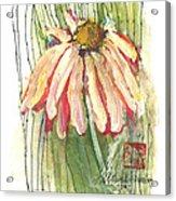Daisy Girl Acrylic Print by Sherry Harradence