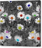 Daisy Rainbow Acrylic Print by Mark Rogan