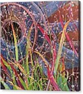 Dance Of The Wild Grass Acrylic Print by Feva  Fotos