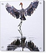 Dancing On Water Acrylic Print by Robert Jensen