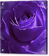 Dark Secrets Purple Rose Acrylic Print by Jennie Marie Schell