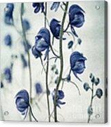 Deadly Beauty Acrylic Print by Priska Wettstein
