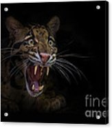 Deceptive Expressions Acrylic Print by Ashley Vincent