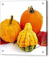 Decorative Pumpkins Acrylic Print by Elena Elisseeva