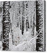 Deep Snow In The Forest Acrylic Print by Lynn-Marie Gildersleeve