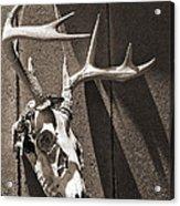 Deer Skull In Sepia Acrylic Print by Brooke Ryan