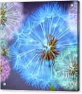 Delightful Dandelions Acrylic Print by Donald Davis