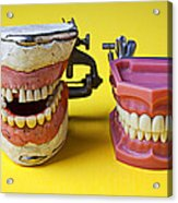 Dental Models Acrylic Print by Garry Gay