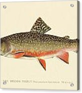 Denton Brook Trout Acrylic Print by Gary Grayson