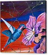 Desert Hummingbird - Study No. 1 Acrylic Print by Steve Bogdanoff