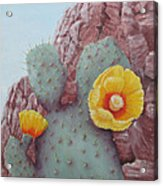Desert Rose Acrylic Print by Roseann Gilmore