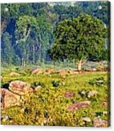 Devil Den's Witness Tree Acrylic Print by William Fox