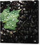 Dew On Leaf Acrylic Print by Scott Norris