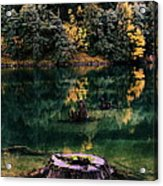 Diablo Lake Tree Stump Acrylic Print by Benjamin Yeager